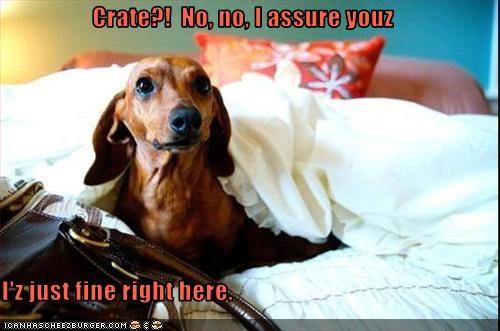 bed dachshund - 3093874688