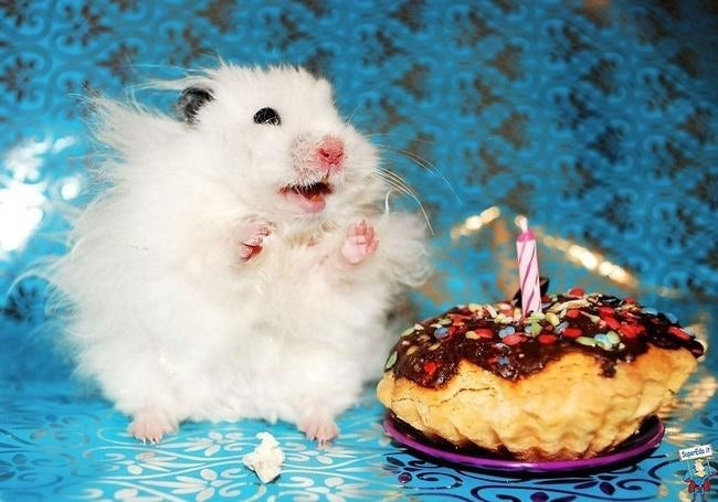 Cute animals celebrating their birthday