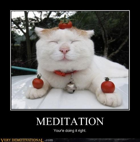 MEDITATION Your'e doing it right.