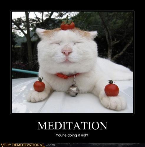 cat wtf meditation - 3094165248