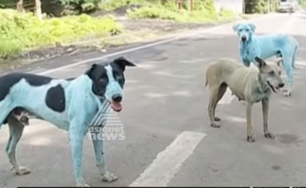 blue stray dogs in indaia