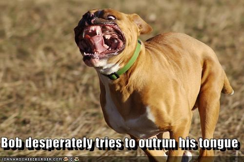 boxer outside running tongue - 3094497280