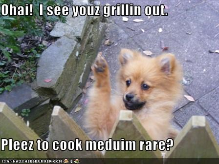 fence grill pomeranian puppy - 3094516736