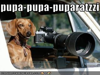 camera,car,dachshund,paparazzi