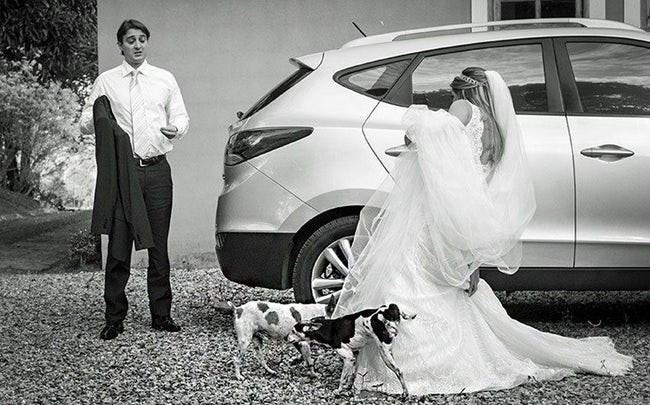 photos of animals at weddings