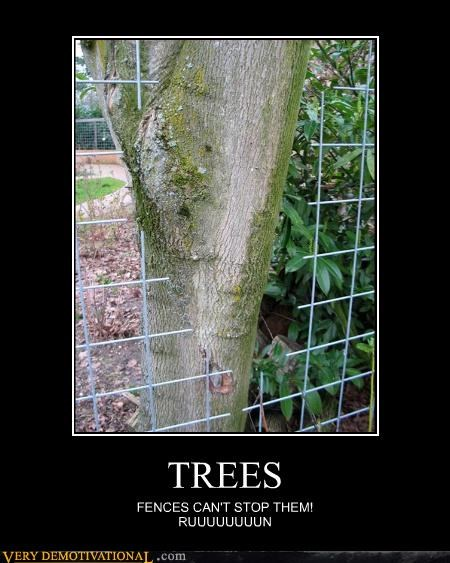 TREES FENCES CAN'T STOP THEM! RUUUUUUUUN