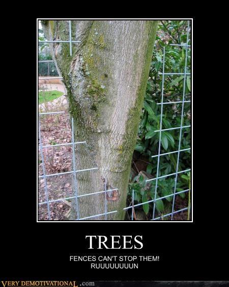 trees wtf fence - 3095528192
