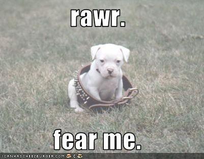 collar pit bull puppy - 3095533056