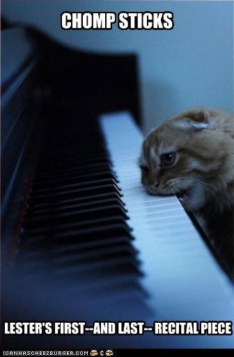 Music nom nom nom piano playing - 3096168704