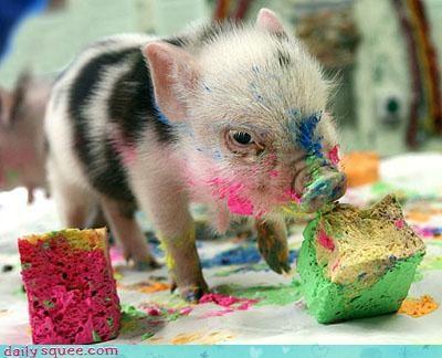 cute micro pig pig - 3096257280