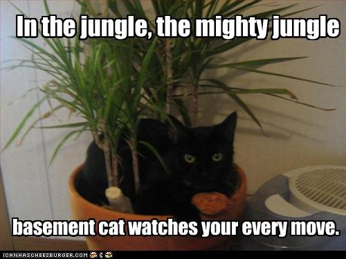 In the jungle, the mighty jungle basement cat watches your every move.