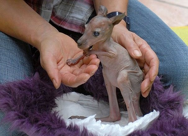 hairless animals you will find hard to recognize