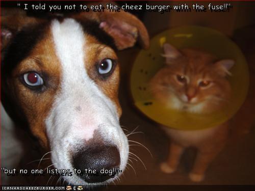 Cheezburger Image 3096347136