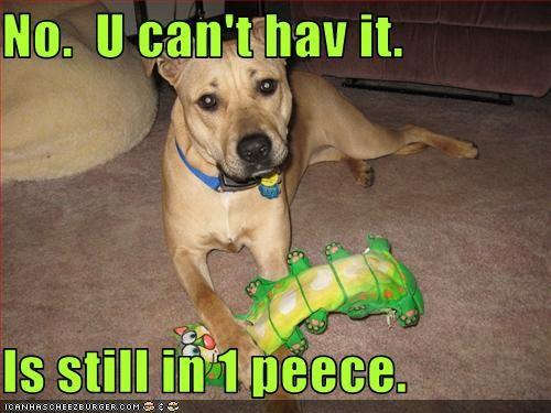 mine,pitbull,toys