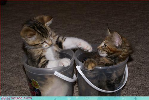 bukkit kitten lolrus - 3096391168