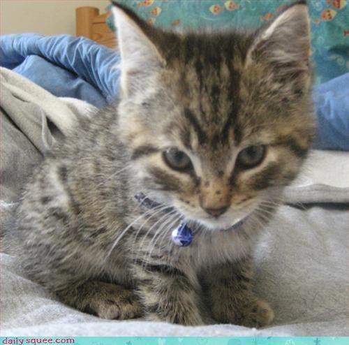 cute freckles kitten - 3096579584