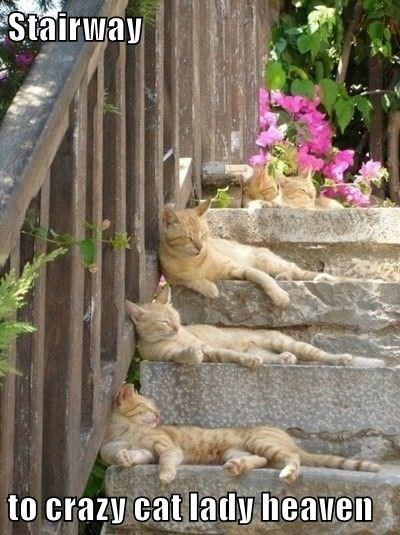 a funny cat meme of stairs covered by cats so its a cat lady's stairway to heaven