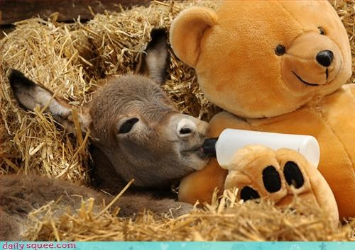 ass cute donkey - 3097100544