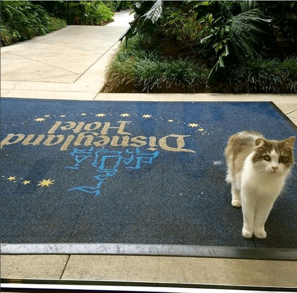 the story of Disneyland cats