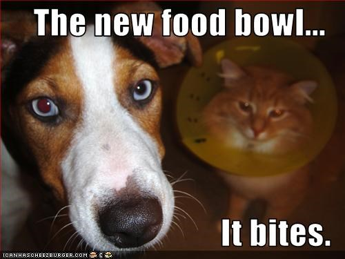 bowl cone food jack russel terrier lolcats - 3097437952