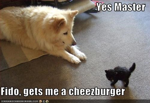 Cheezburger Image 3097625088