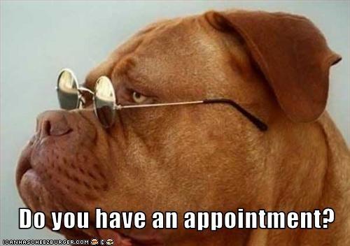 bulldog glasses sunglasses - 3097699328