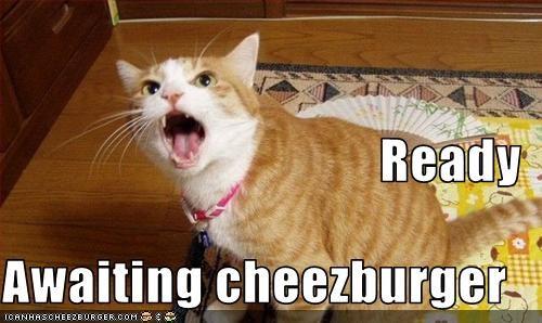 Cheezburger Image 3098610432