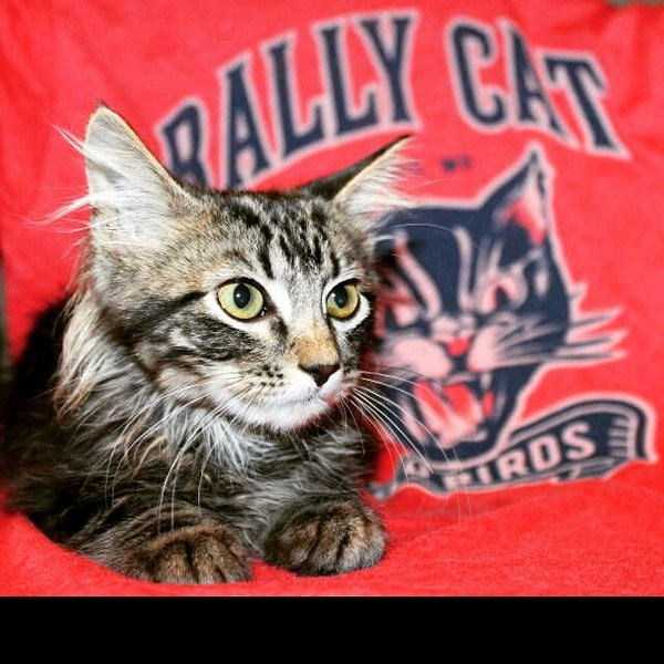 a photo of the rally cat - cover for a story about the rally cat that ran in the middle of the field