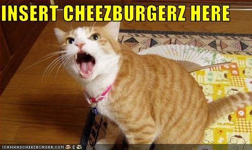 Cheezburger Image 3098967296