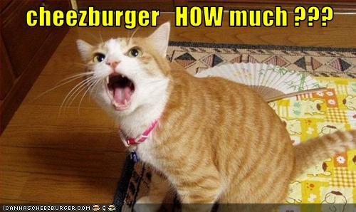 Cheezburger Image 3099005440