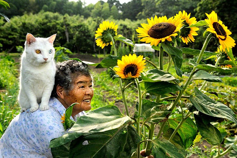 photos of Japanese grandmother and her cat