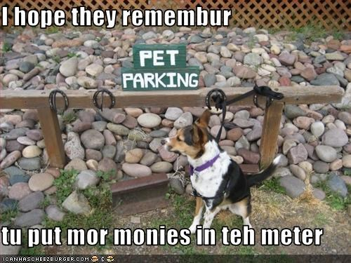 leash money parking whatbreed - 3099335424