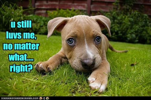 love pitbull puppy worried - 3100844288