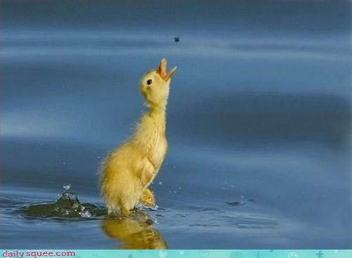 bird duck duckling - 3100930560