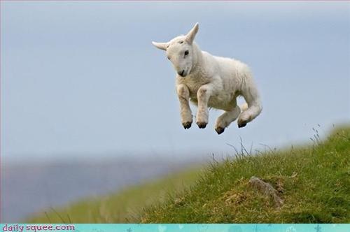 bounce,jump,lamb