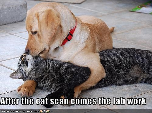 cat,cat scan,doctor,friends,lab work,labrador,medicine