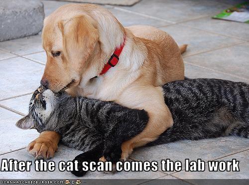 cat doctor friends labrador medicine - 3103522560