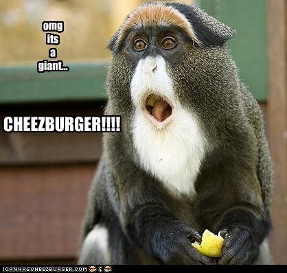 Cheezburger Image 3105179392