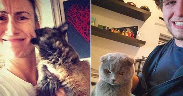 gatos no quieren selfies