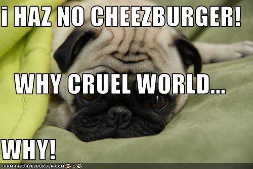 Cheezburger Image 3107226880