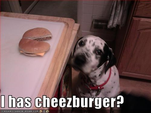 Cheezburger Image 3107539712