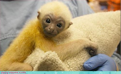 baby monkey weirdo - 3109668096