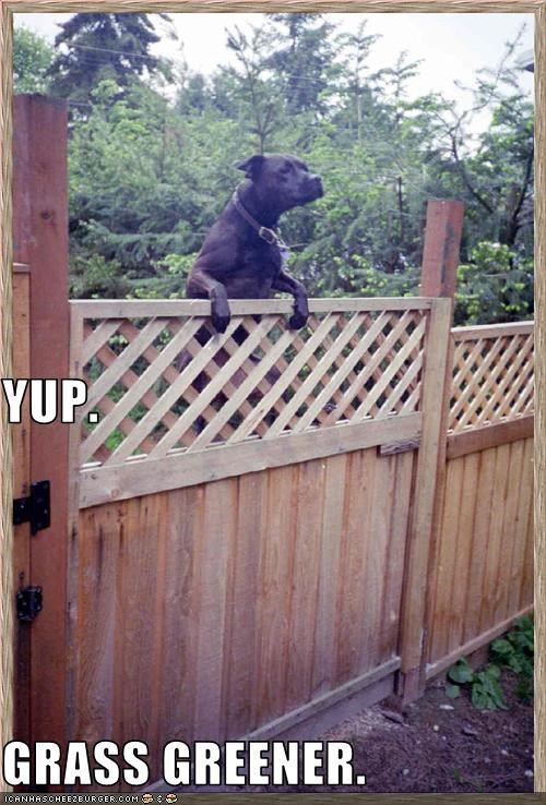 fence grass green labrador - 3110078720