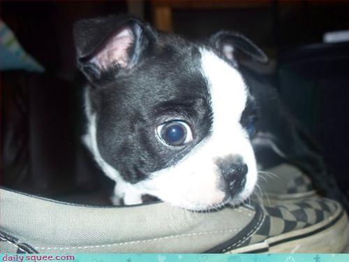 chew puppy toy - 3110095104