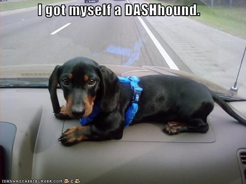 cars,dachshund,dashboard