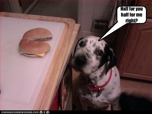Cheezburger Image 3110323456