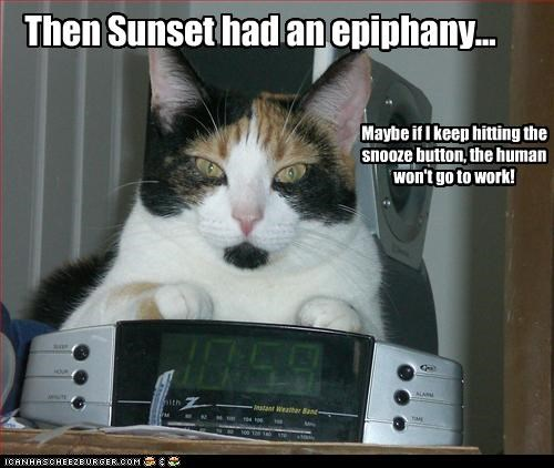 Then Sunset had an epiphany... Cleverness Here Maybe if I keep hitting the snooze button, the human won't go to work!