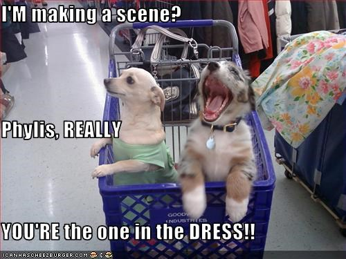 chihuahua,couple,dress,fight,married,shopping cart,shouting,whatbreed
