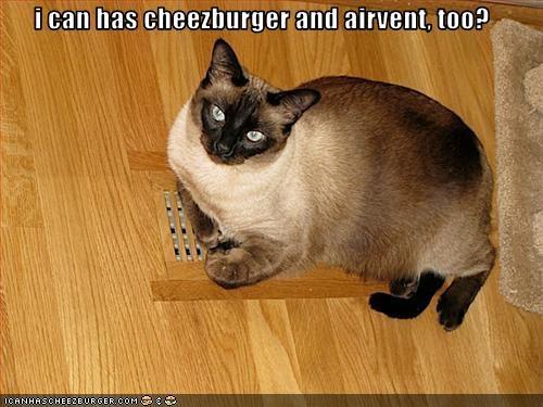 Cheezburger Image 3112870656