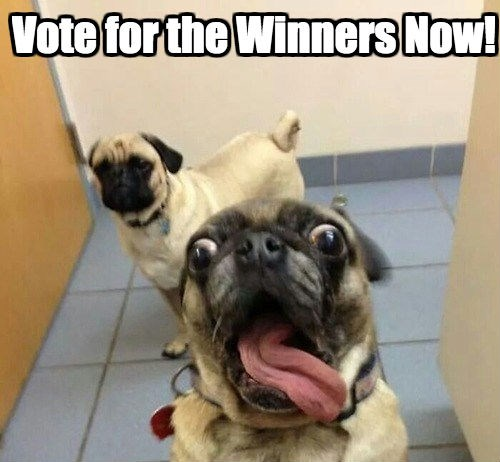 dogs pugs caption contest - 311301